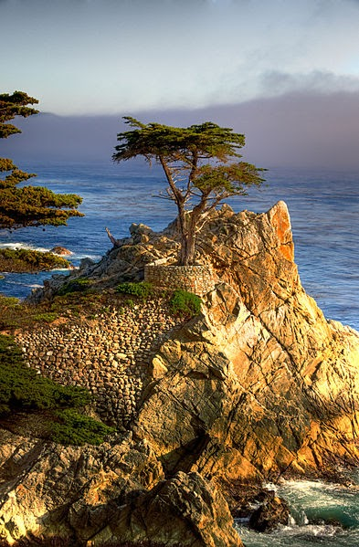 A rocky outcropping by the sea with a tree