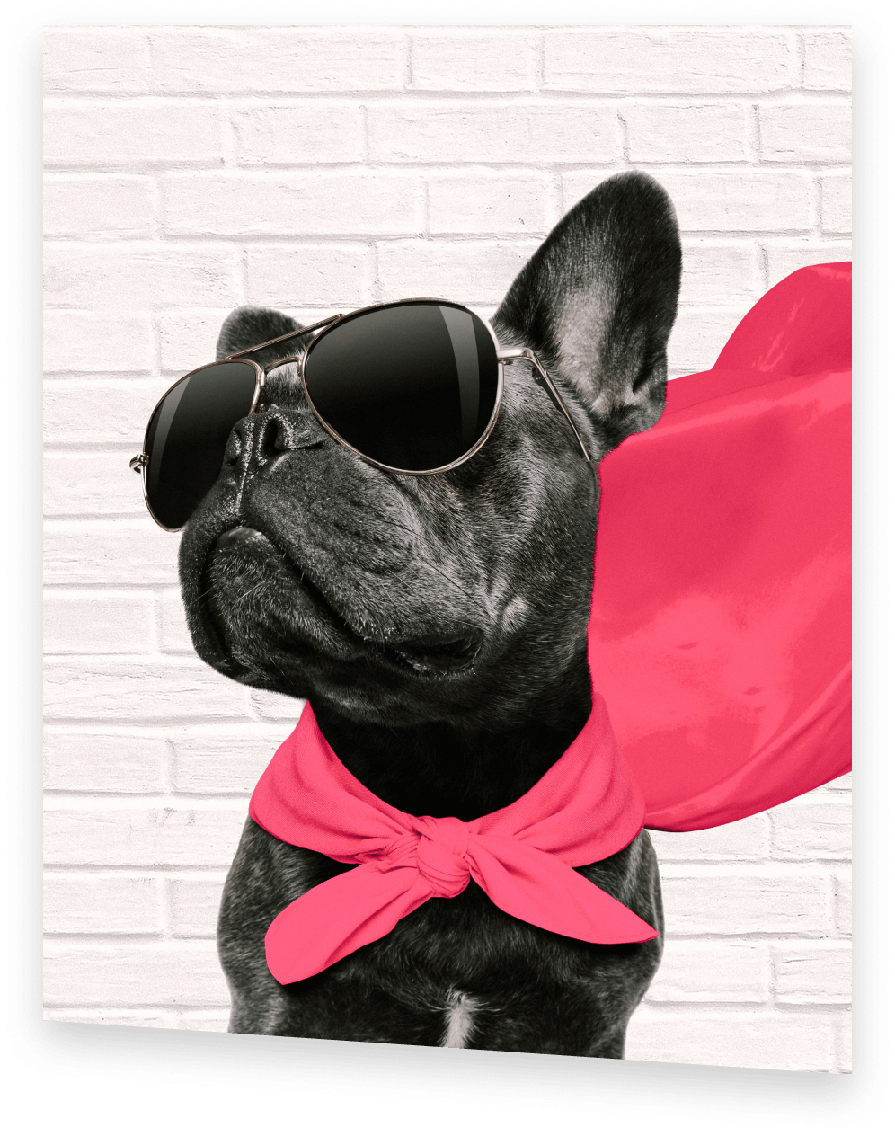 ACT Test prep coach black french bulldog wearing red cape and sunglasses