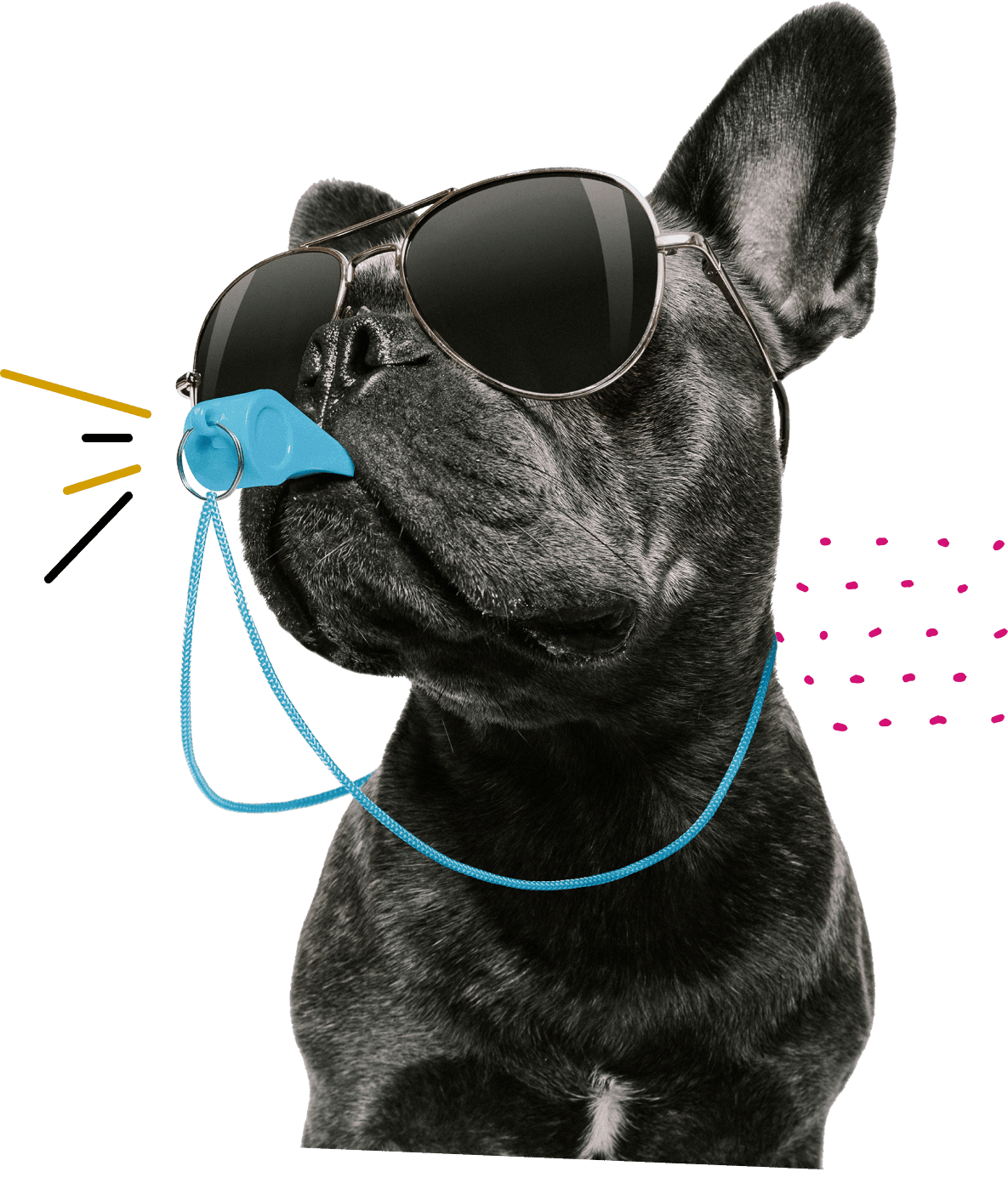 ACT Test Prep Coach Black French Bulldog with sunglasses and a whistle