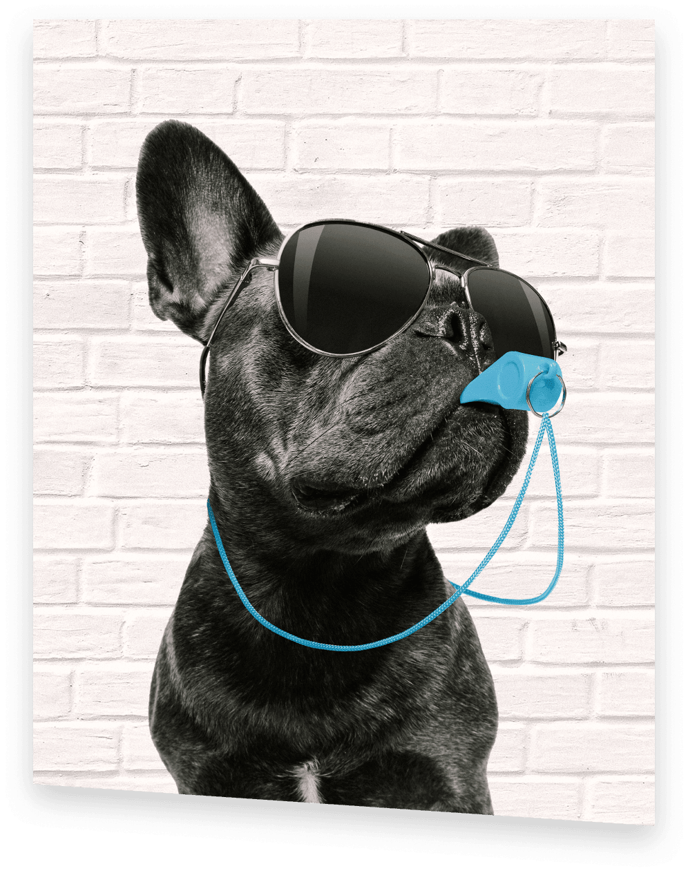 Shmoop's ACT Test Prep Coach, a black french bulldog wearing sunglasses and blowing whistle